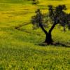 自然からの隔絶が、メンタルヘルスにどう影響するか