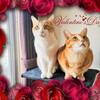 Happy Happy Valentine's Day~