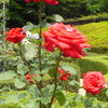 デジカメ散歩 IN 旧古河庭園《岩田芳江さんの作品》