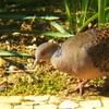 野鳥が庭に集う日々