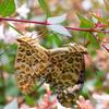 夏休みの自由研究 庭の虫さがし(2) どこにどんな虫がいる?