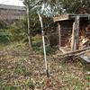 栗の木の剪定 さて今年の栗はこれくらいに Pruning a chestnut tree