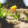 「成長意欲」を手放すことが、勝手に成長していくコツ。