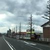 街路樹 アメリカフウ モミジバカエデ