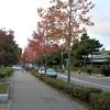 秋の京都・晩秋洛東パワースポット巡り『冷泉通り』