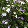 紫〜青系の花たち 10月