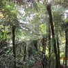 「ニュージーランド『感動』の1週間」(39)『ブランド力』ー「カウリの森」からワイナリーで昼食を。