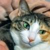【愛猫日記】毎日アンヌさん#159