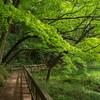 新宿から30分!緑豊かな丘陵とアートと古民家が一堂に会する「生田緑地」に行ってきた