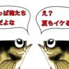 ついに尺メバルとご対面!?三浦半島メバルのハイシーズンは夏だな!!