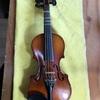 かわいい バイオリン