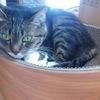 猫が爪とぎの上で寝る理由+ベッドに丁度良い爪とぎが発覚!