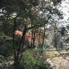 「マダム倶楽部」活動報告 まだまだ紅葉の美しい小道を散策♪  12月10日