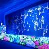 【新江ノ島水族館】日本の海の魅力たっぷりの水族館
