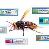 虫刺されにはどの強さのステロイドが良く効くのか?蚊・毛虫・ムカデなどに最適な薬を紹介。