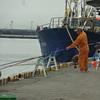 7月下旬のカラフトマスとそれ以降の釣果との関係/今日の紋別港釣り情報