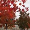 阪急北千里駅・三色彩道(さんしきさいどう)で紅葉狩り&年賀状に使う写真撮影してきた
