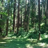 人の来ない場所の巨木が、パワースポットだったりする