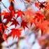 京都・嵐山で花灯路を満喫してきました♪