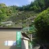 龍山町瀬尻段々茶畑