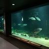 今日のおやつと旅の記録(京都大学白浜水族館)