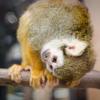 大宮公園小動物園のカピバラに癒されに行き、リスザルに恋しました