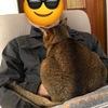 今日のヨガ 3月27日 と朝の猫さん。