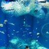 イルカショーの楽しみ方@大洗水族館「アクアワールド」