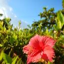 オキナワライフ〜バックパッカーからの沖縄移住ブログ〜