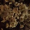 夜桜見物ランニング