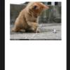 swift4 ImageViewerで画像を拡大表示