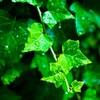 あなたに幸せをもたらしてくれる観葉植物2つ