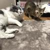 【猫ブログ】昔のサラちゃん