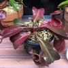 [放置栽培]太陽光クラスの植物用LEDと自動霧吹きシステム[室内栽培]