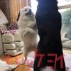 サン王山と、マコ丸富士の闘い〜⊂≡(゚Д゚´)∩アチョォオォ!!