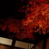【素材】紅葉ライトアップ⑤