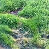 4月の庭 その2「1月からの庭の手入れ 雑草退治編」