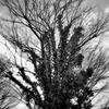 絵本「おおきな木」の翻訳解釈比べ