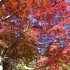 筑波山で紅葉と関東平野一望、そして温泉…のはずがッッ!!