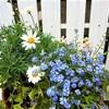 春のお花とガーデニング。園芸店で買ったお花とは?
