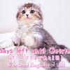 【週末英語#189】「〜まで残りあと何日」は英語でなんて言う?