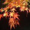 【紅葉】日本三景「松島」。円通院のライトアップは超絶景!