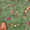 作為の落ち葉