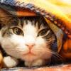 冬の猫ちゃんの寒さ対策!100均で揃う道具でポカポカをキープしよう!