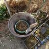 【DIY】お庭でビオトープ造り!お父さんの日曜大工