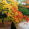 秋の高野山