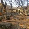 梵魚寺から金井山城を目指す