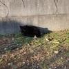 【地域猫】Vol17.黒猫ちゃん保護♪ 冬の準備