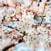 ママには「進級」や「成長」という言葉はないのか? 3月25日~29日は、ショップお休みいたします。