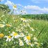 【ドイツ】北ドイツの田舎で夏を過ごしてみよう!